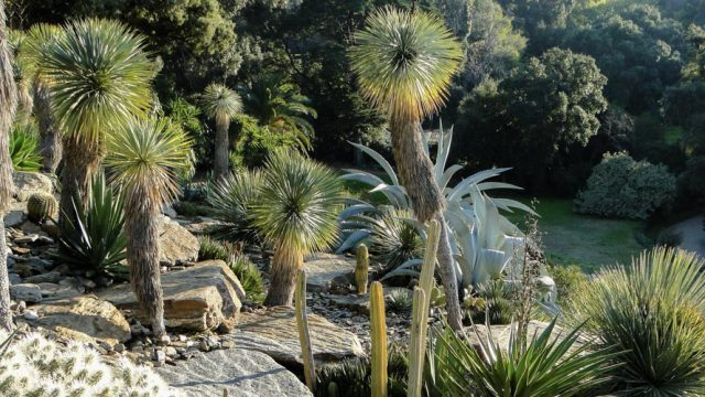 The gardens of Provence