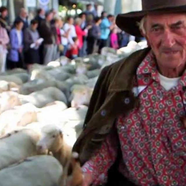 4000 sheep go window shopping in St-Remy-de-Provence